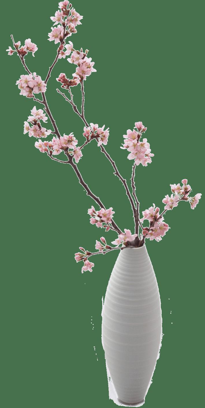 mal di schiena vaso ciliegio